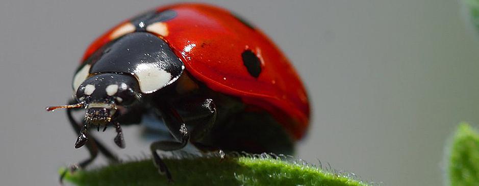 Ladybird © JonSullivan-PDphoto