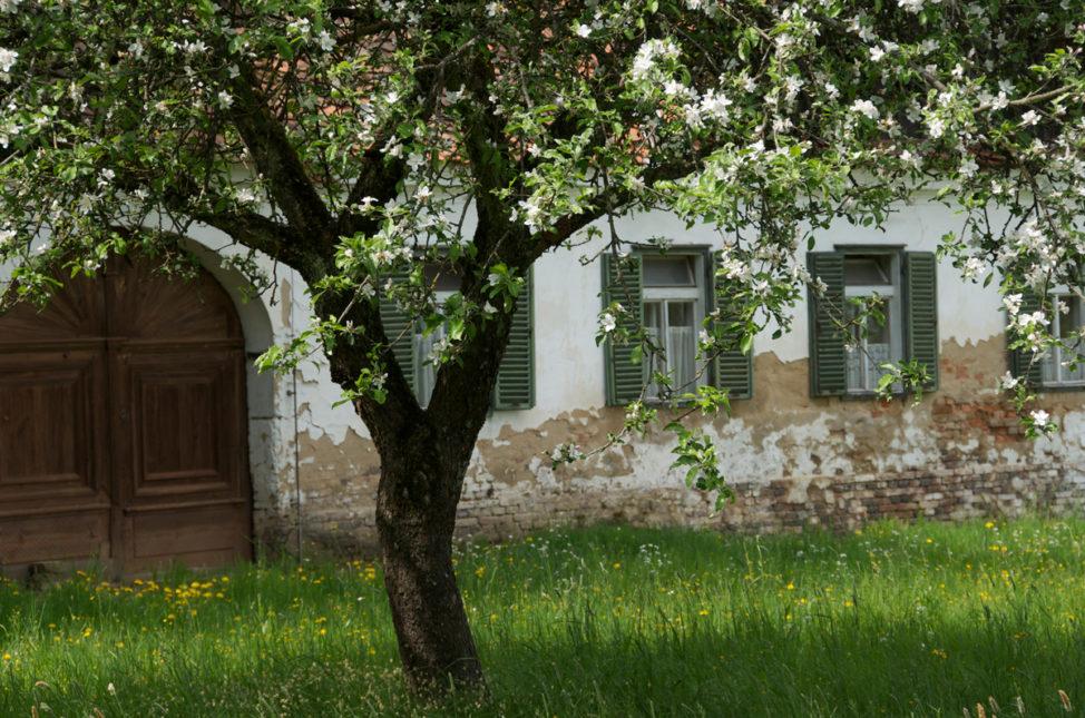 Jedes Haus braucht seinen Baum