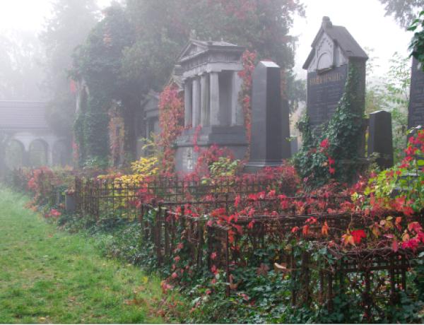 Zentralfriedhof4©GartenAkademie.com