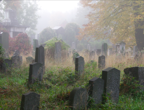 Zentralfriedhof6©GartenAkademie.com