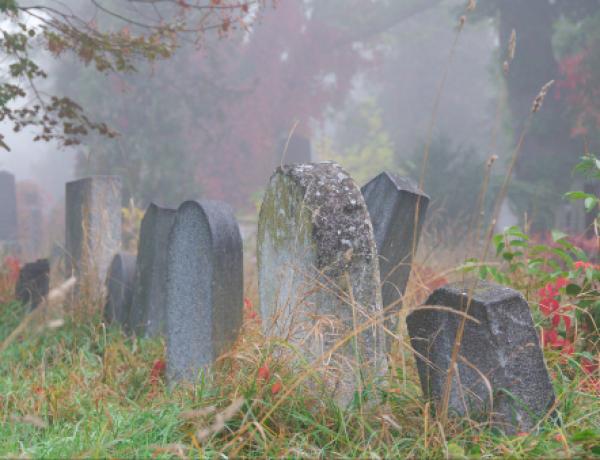 Zentralfriedhof7©GartenAkademie.com