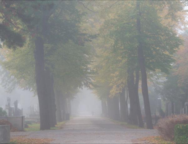 Zentralfriedhof8©GartenAkademie.com