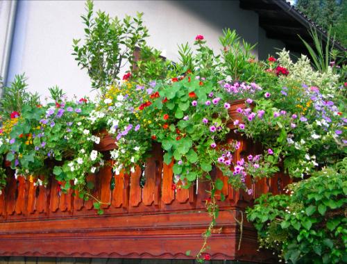 Gemischte Balkonkästen mit Hängesurfinien, Tagetes und Kapuzinerkresse ©GartenAkademie.com