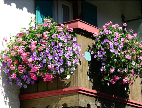 Balkonkästen mit Hängepetunien und Hängepelargonien ©GartenAkademie.com