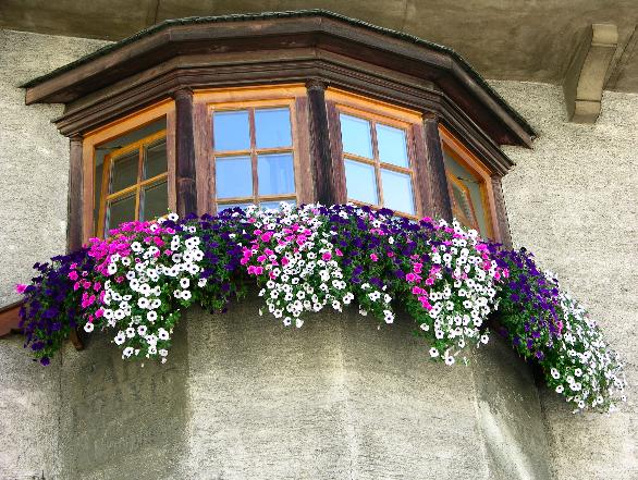Balkonblumen-Pracht