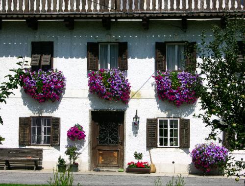 Fensterschmuck mit Hängepetunien ©GartenAkademie.com