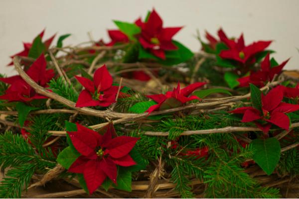 Gewundener Kranz mit Weihnachtssternen