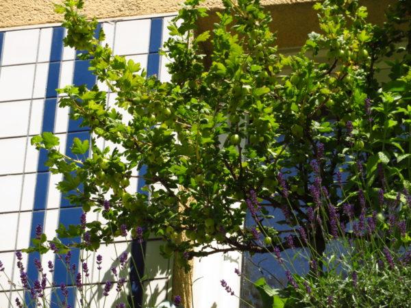 FensterObstgehoelze-GartenAkademieCOM-10