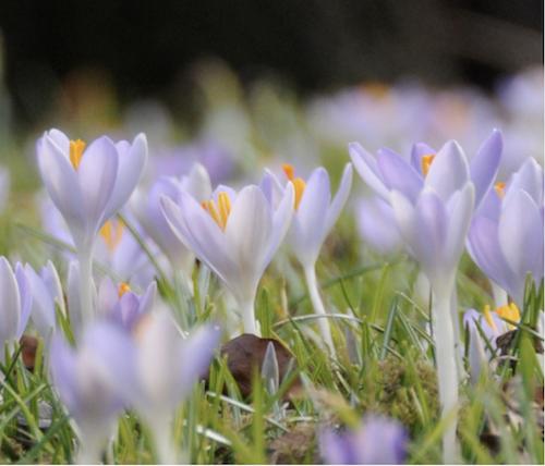 Elfenhafter Frühlingszauber