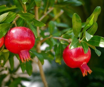 ©fietzfoto/Pixabay.com