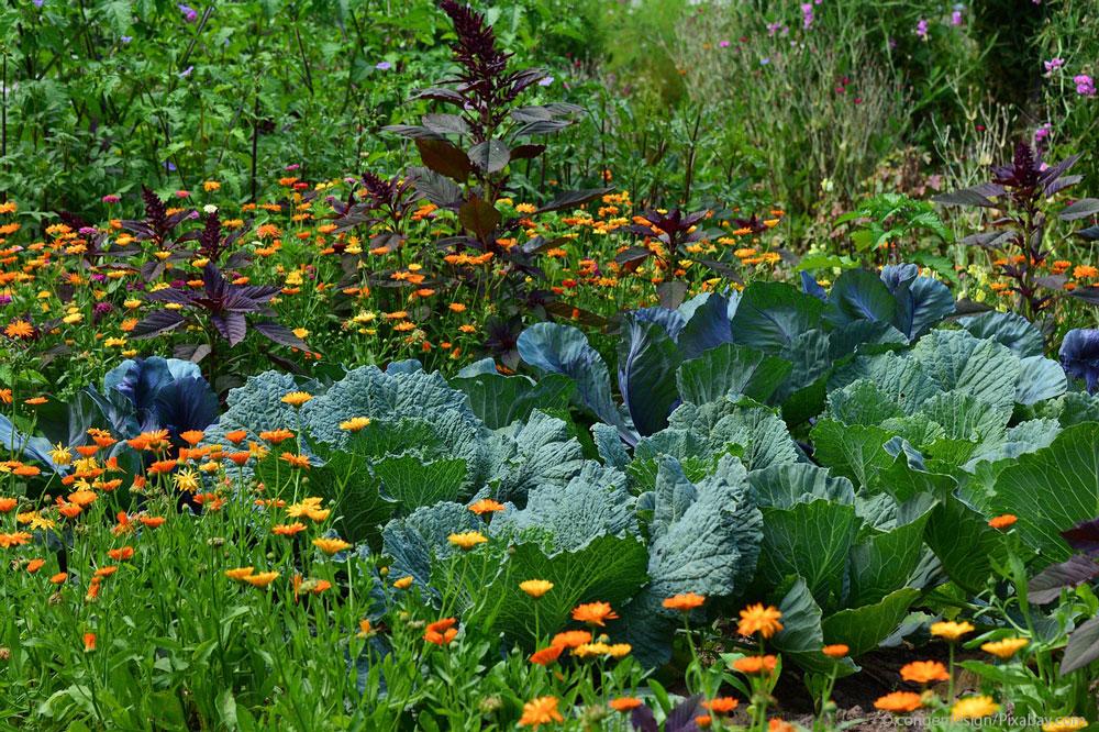Mischkultur –Nachbarschaftshilfe im Gemüsebeet