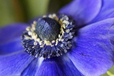 anemone-670362_Efraimstochter_Pixabay