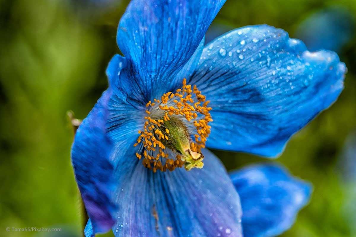 """""""CLASSIC BLUE"""" –ein cooler Farbtrend erobert den Garten"""