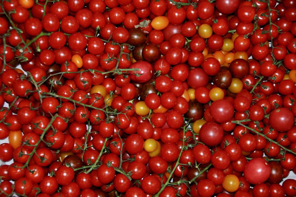 Cherrytomaten-Varianten ©GartenAkademie.com